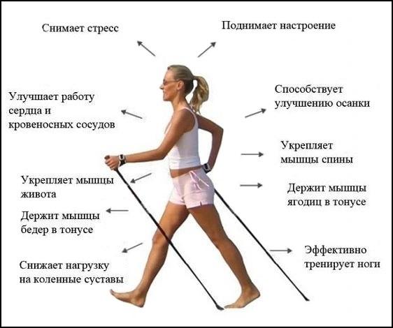 skandinavskaya-hodba1